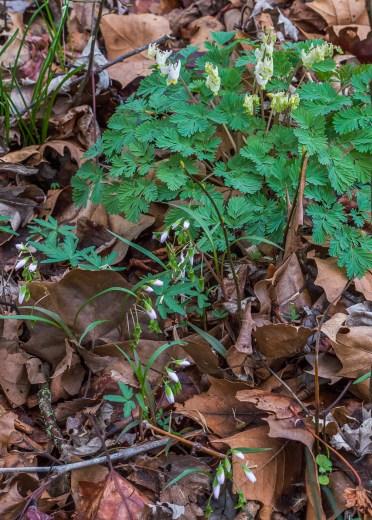 11April2015_wildflowers-in-bud-1