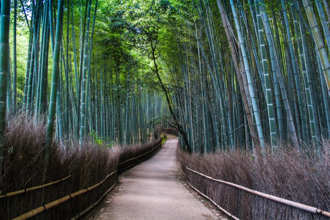 bamboo-forest-kyoto-edit