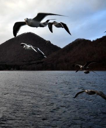 Toya-Gull-BirdsOfFeather