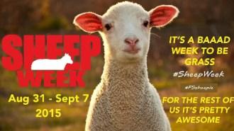 sheepweek