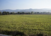 Road to Florence (ROMEing Around 4)