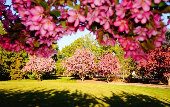 5 Places For Spring Pictures in Edmonton
