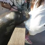 A Sea Lion Grabbed a Young Girl Off a Dock in Canada