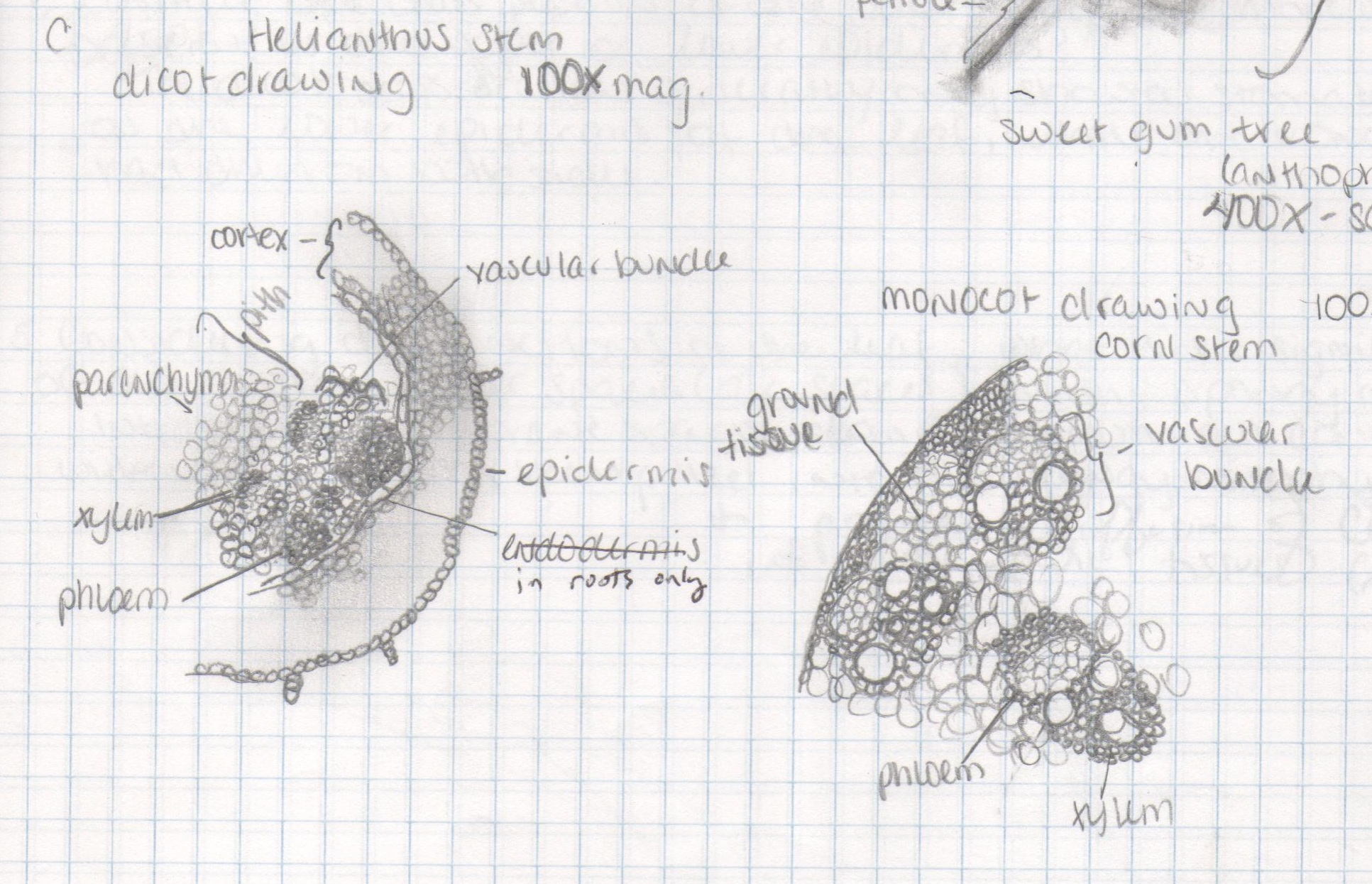 Flower Monocot Dicot Diagram