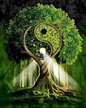 tree of life (1)