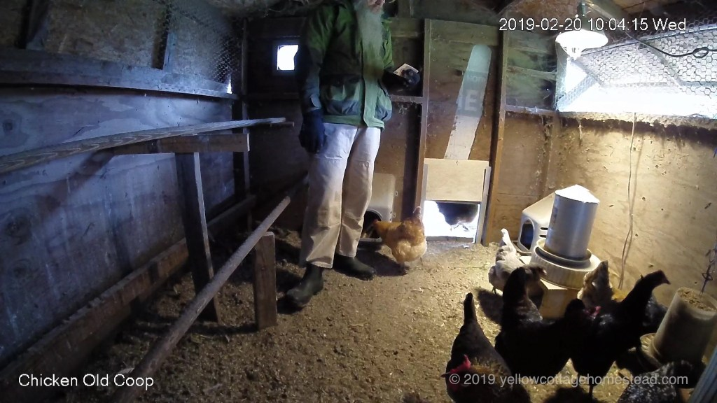 David and chickens in the coop