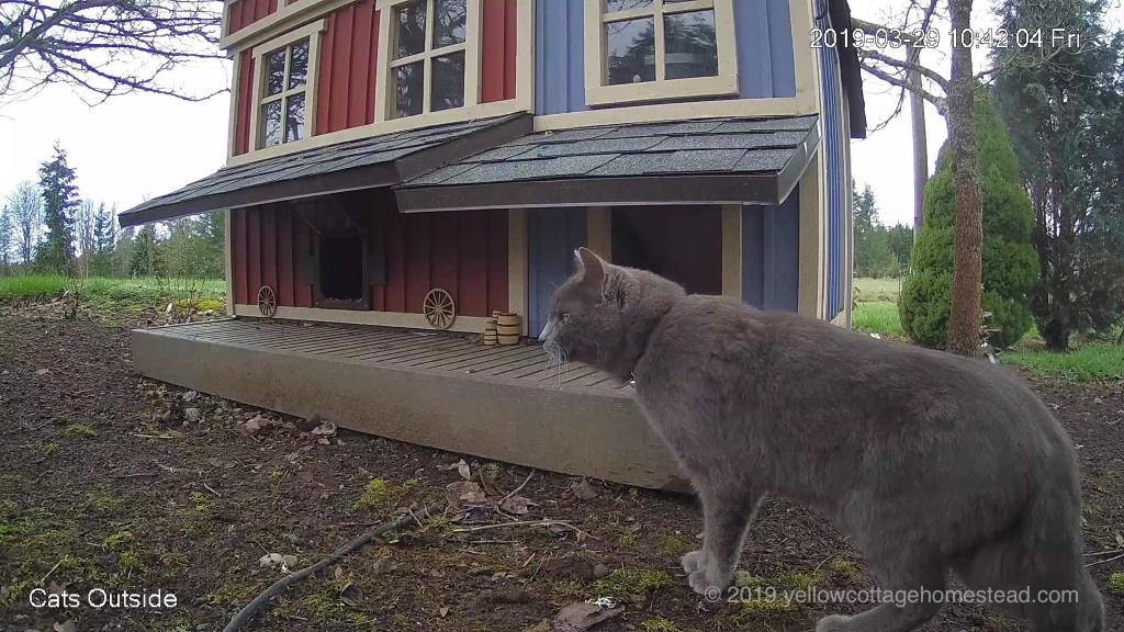 Alien gray cat