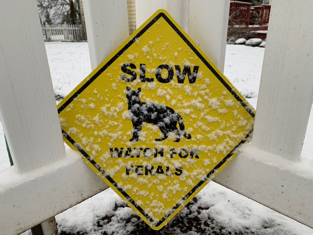 Slow, watch for ferals sign