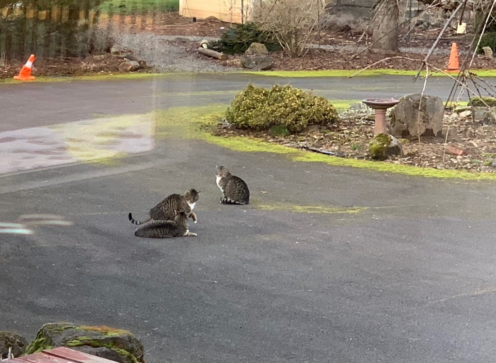 Cats on driveway