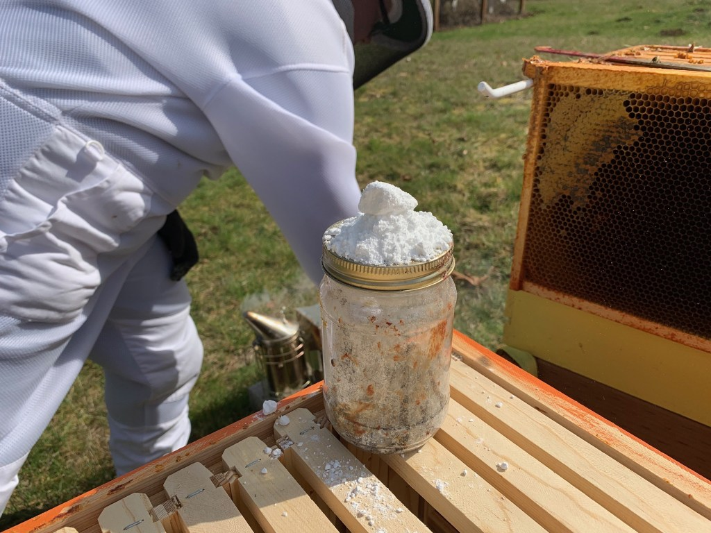 Powdered suger on jar of bees