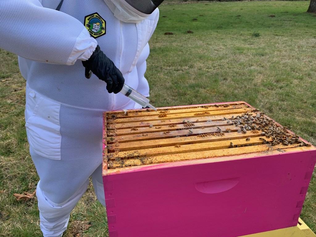 Bee treatment