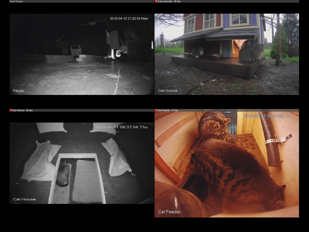 Screenshot of all five cats