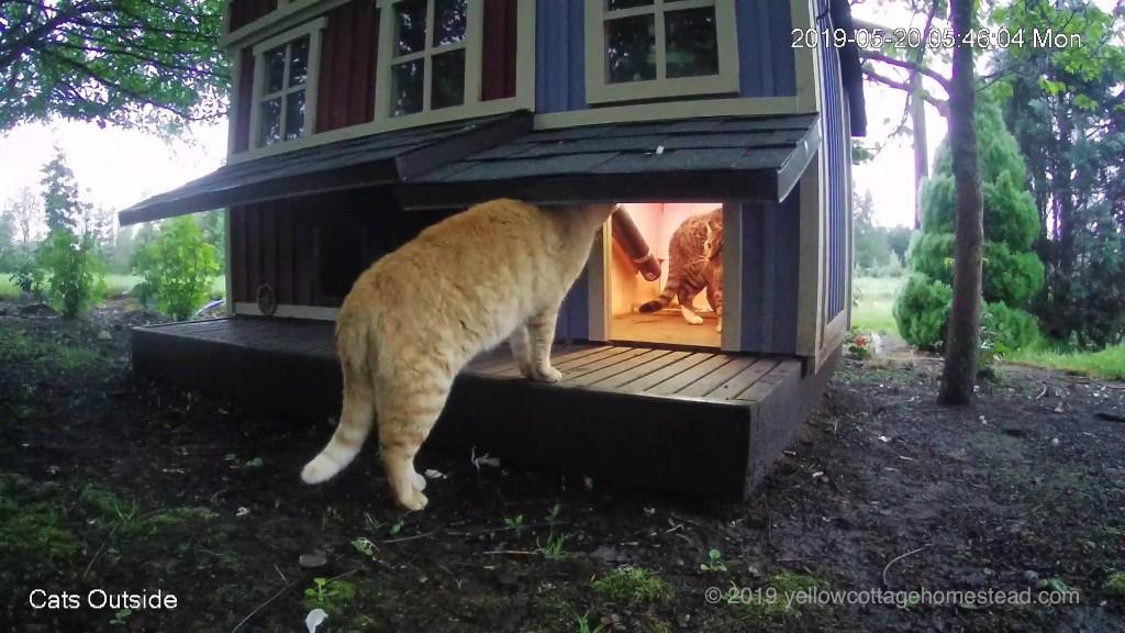 Orange cat with cat in feeder