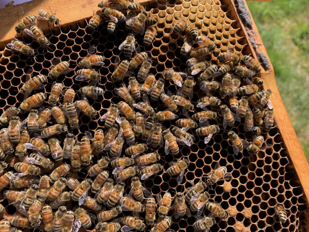 Closeup of bees