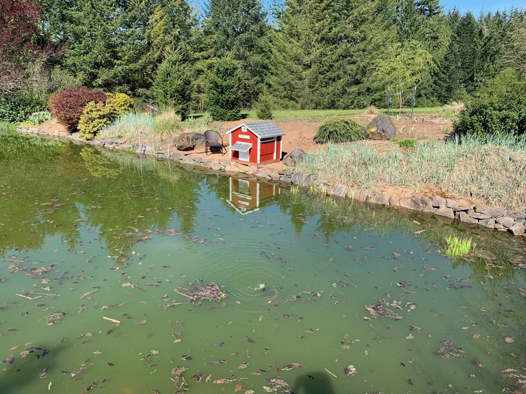 Duck house across pond