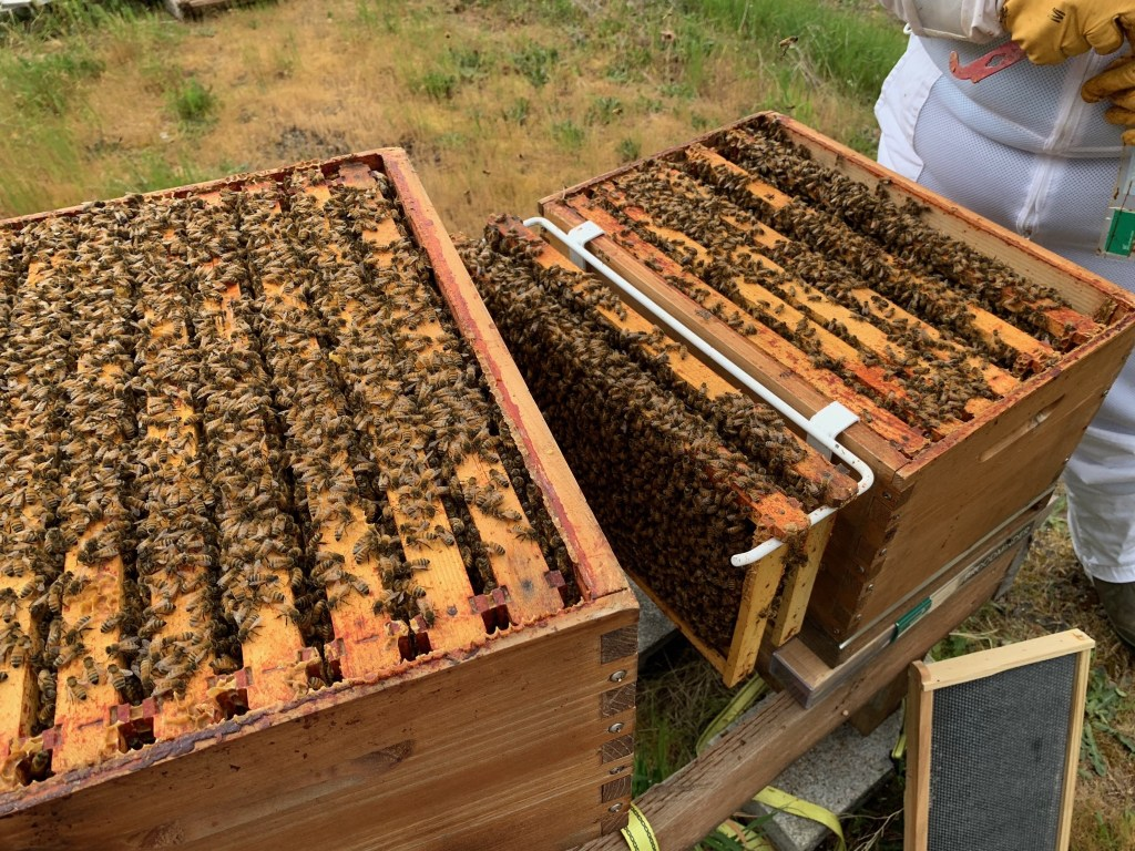 Lots of bees