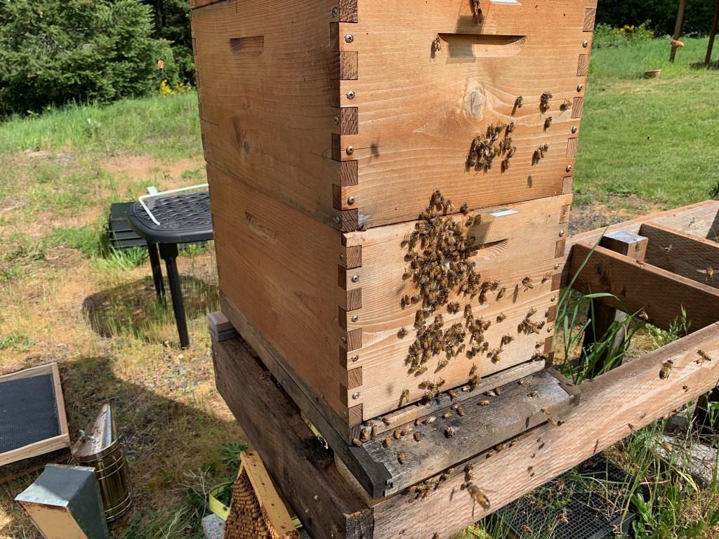 Bees outside box