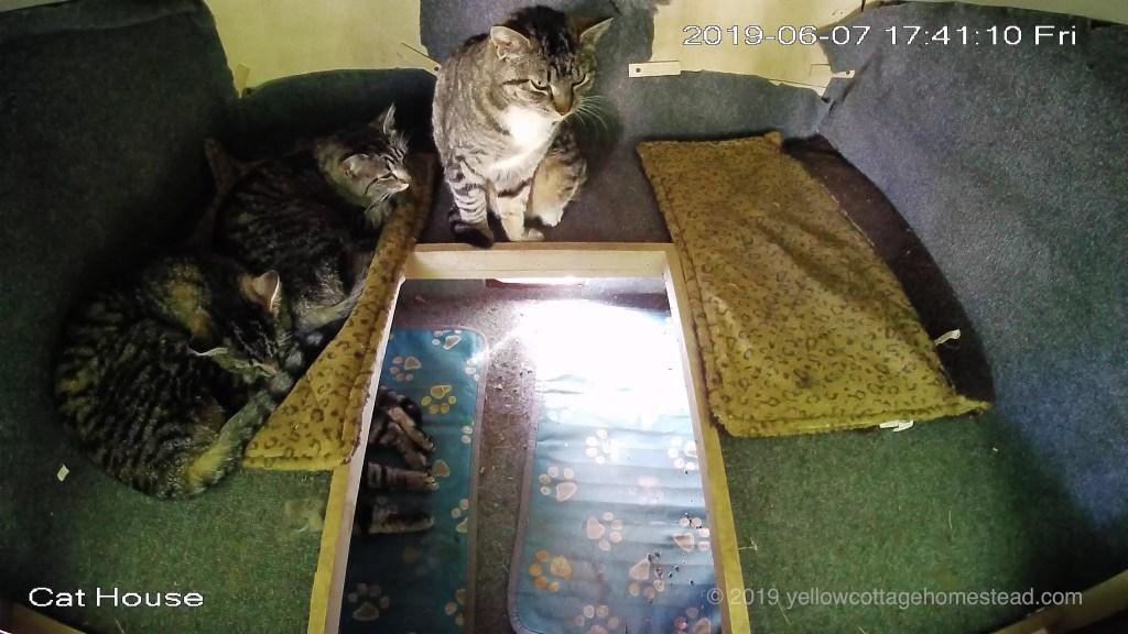Four cats inside