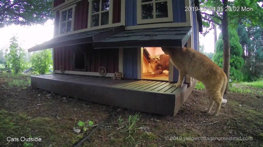 Orange cat peeking into feeder