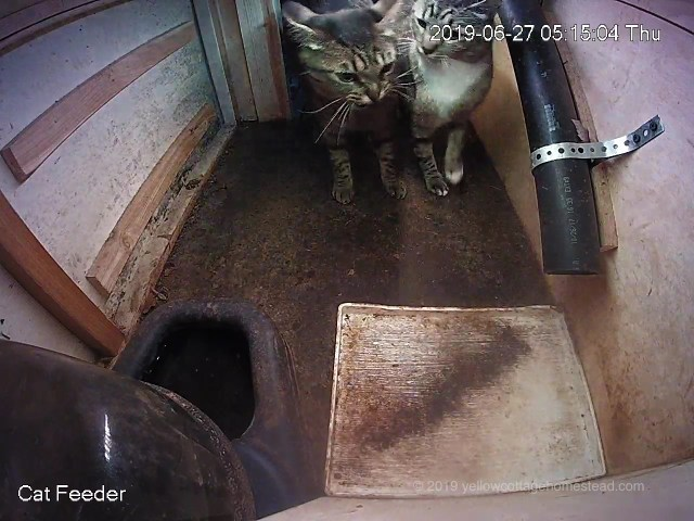 Two cats in feeder