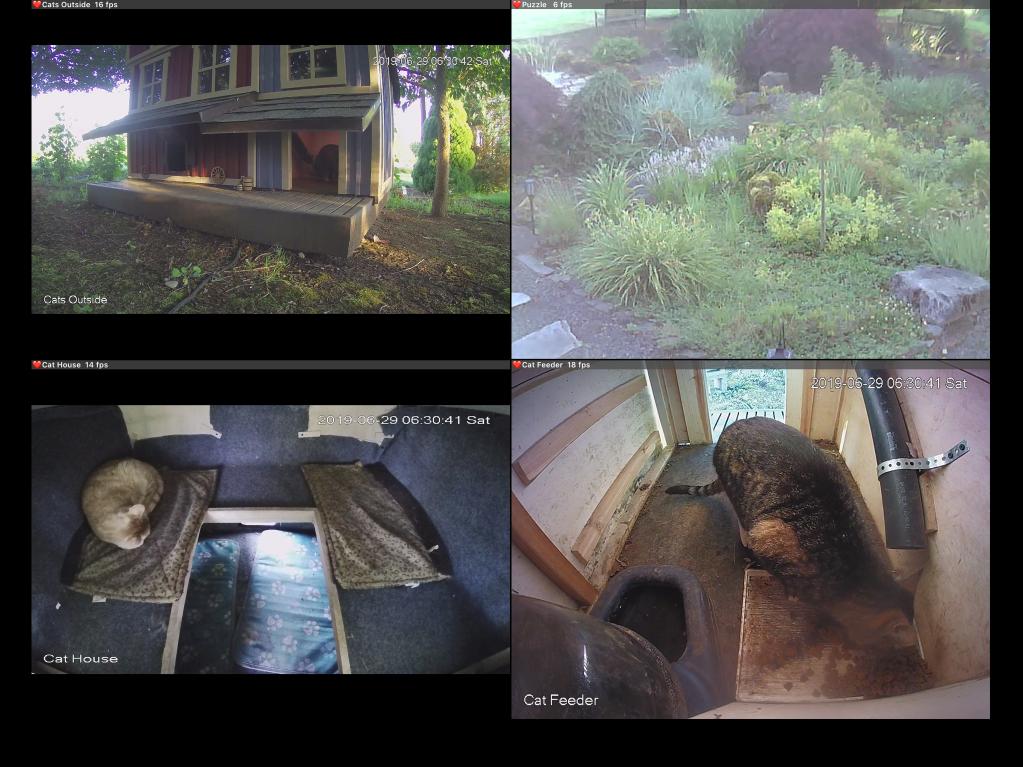 Screenshot of cat cams