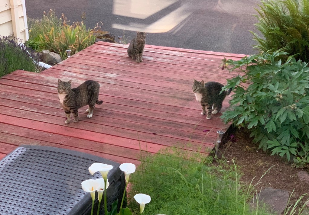 Three cats on the front steps