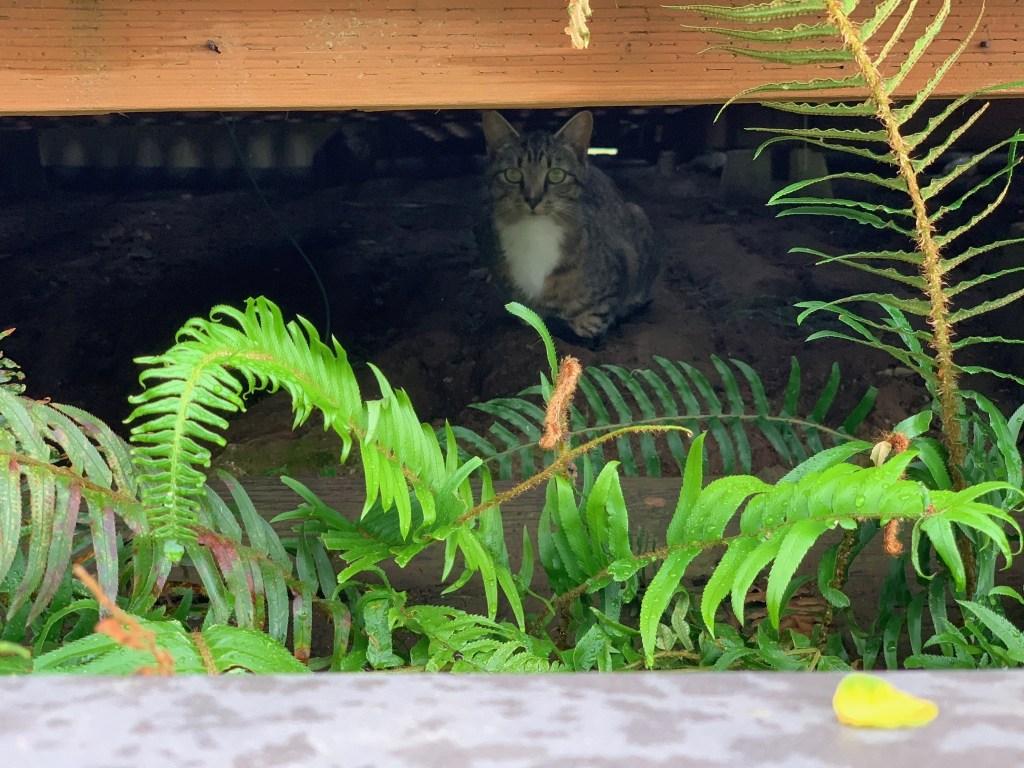 Cat under deck