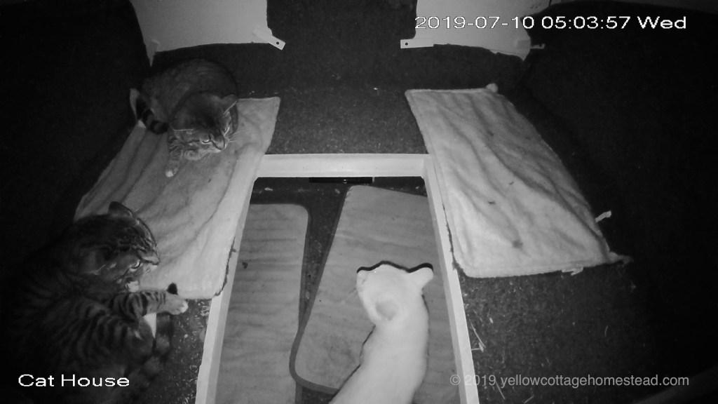 Orange cat in shelter