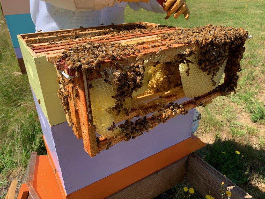 Bees: new hive, Flow harvest – Yellow Cottage Homestead
