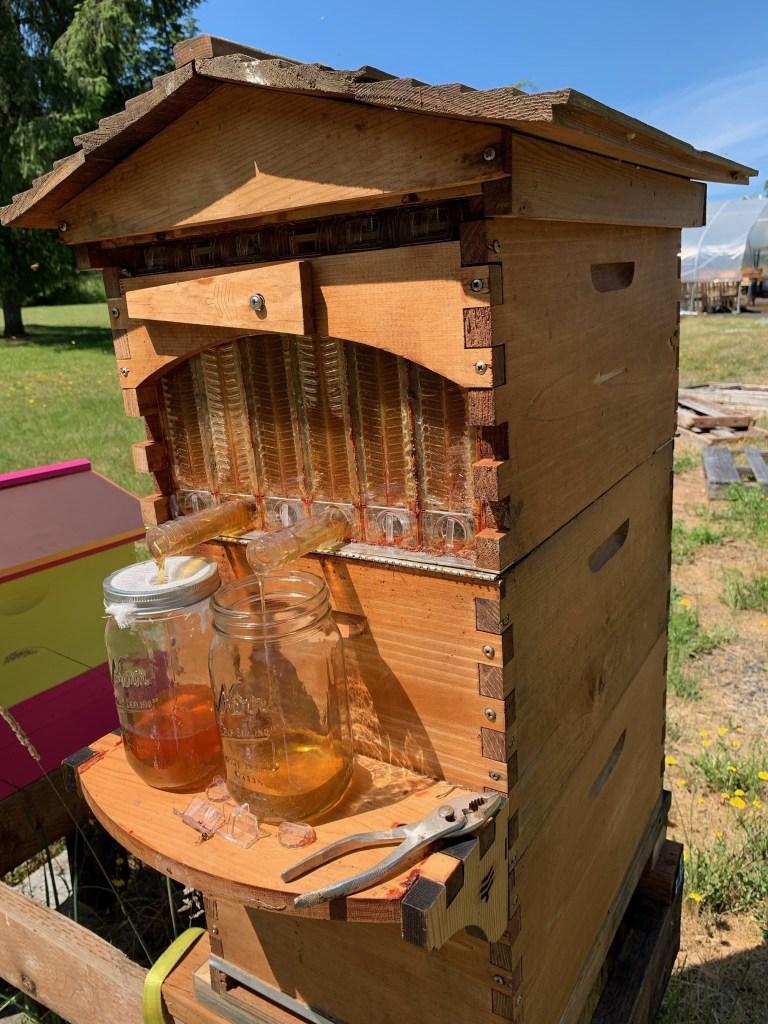 Harvesting Flow hive