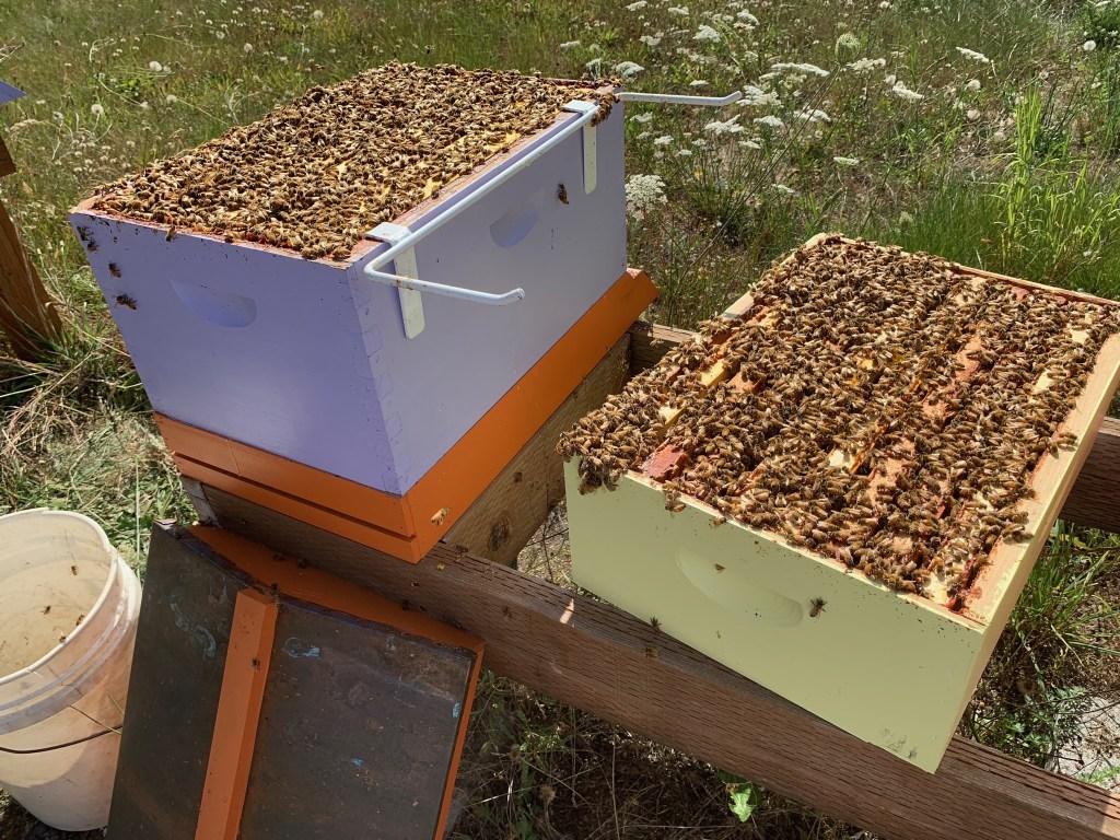 Cranky hive