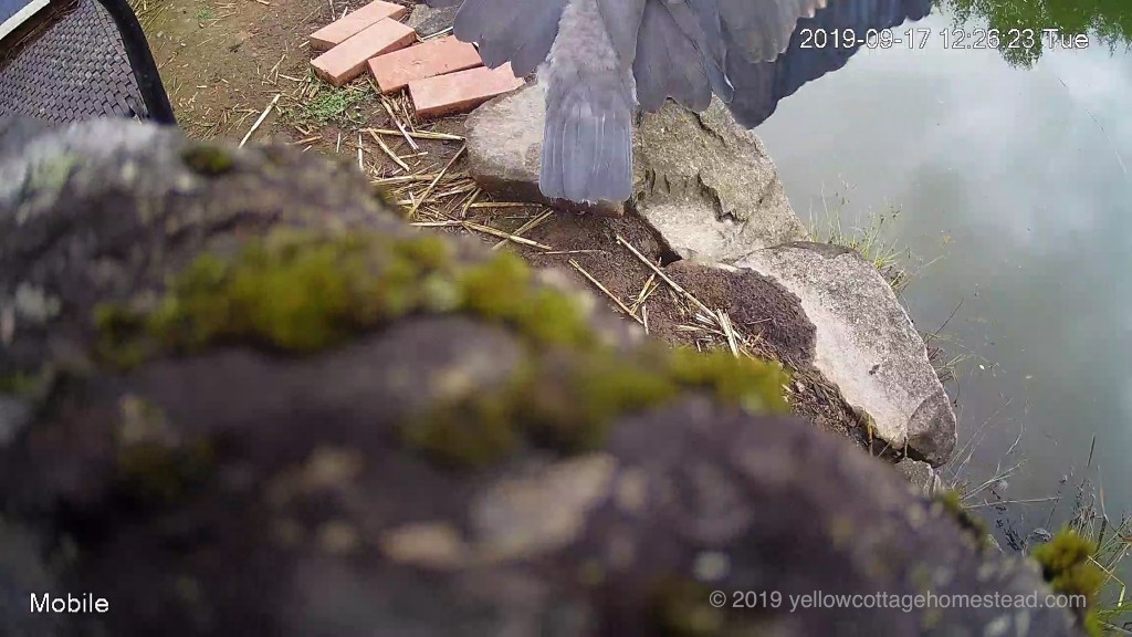 Heron knocked camera