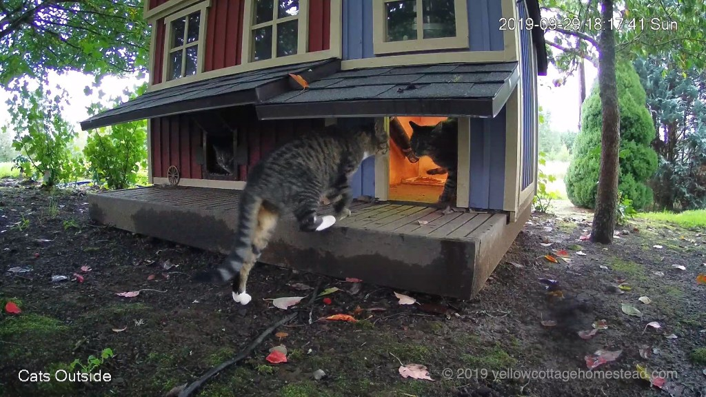 One cat in shelter, one in feeder, one arriving