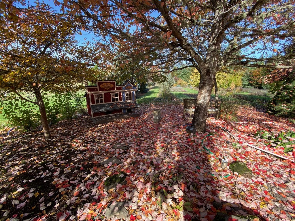 The cat house and fall foliage