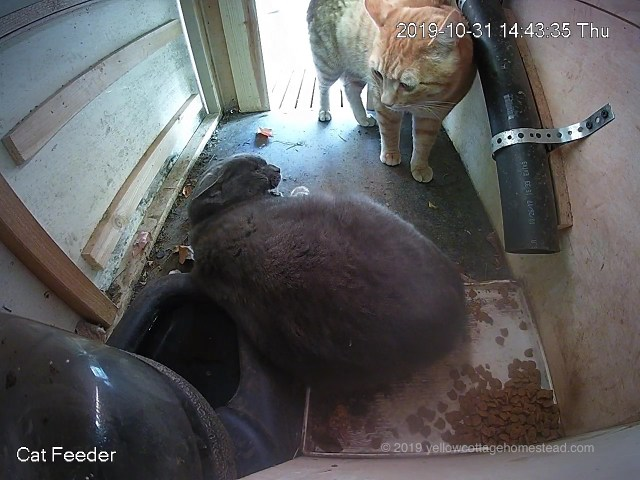 Pumpkin and Paladout in feeder