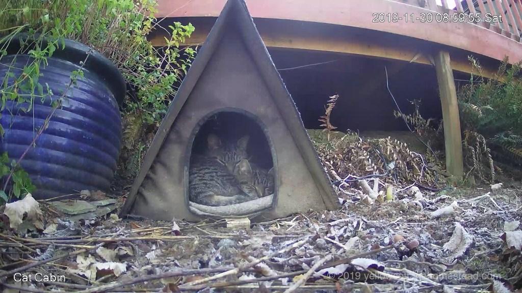 Cabin snuggles