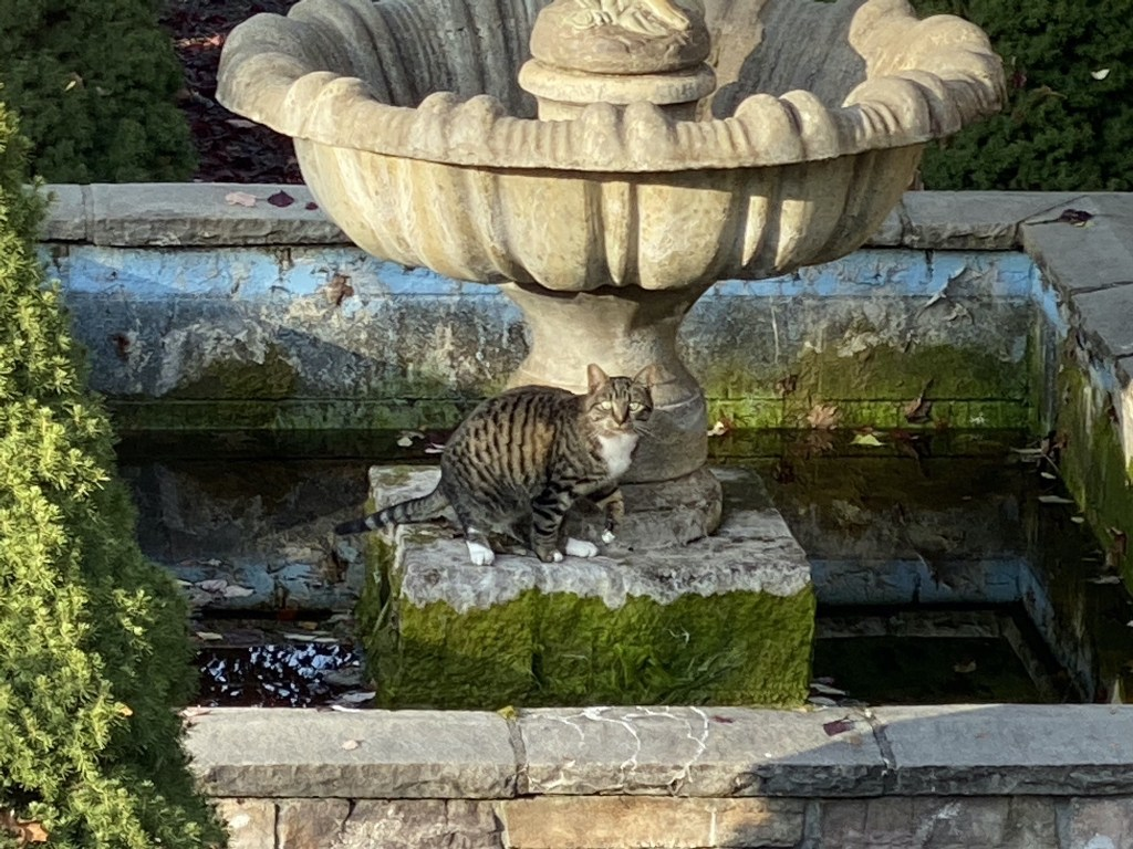Porcini on the fountain