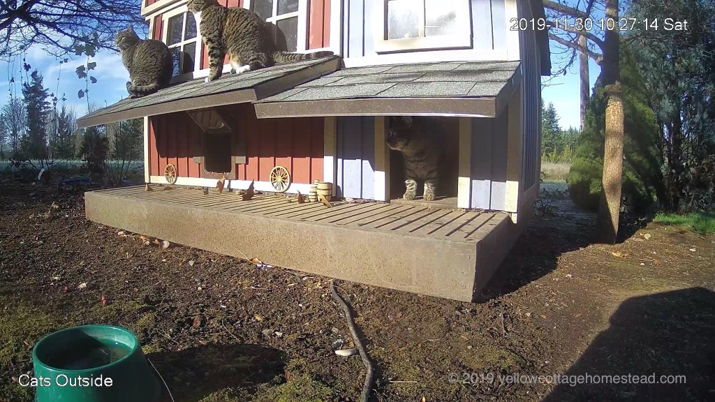 Two cats on awning, one in feeder