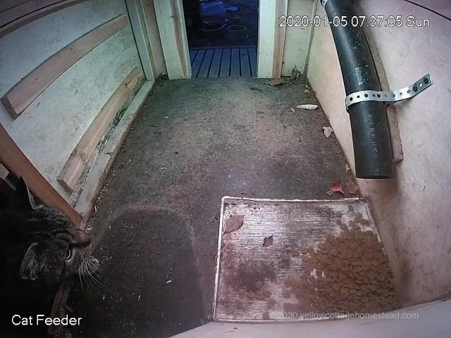 Poppy going in feeder back door