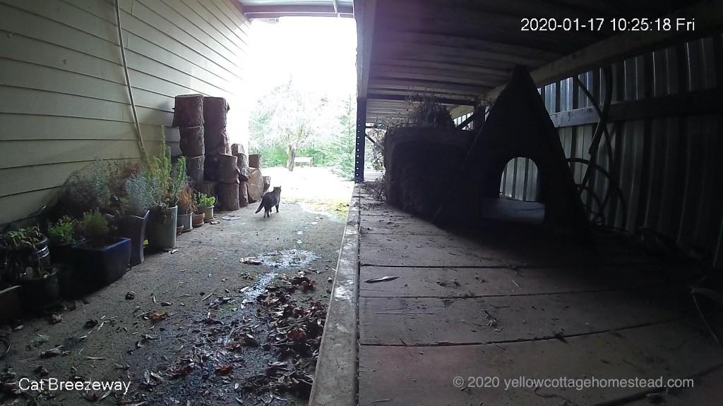 Cat in breezeway
