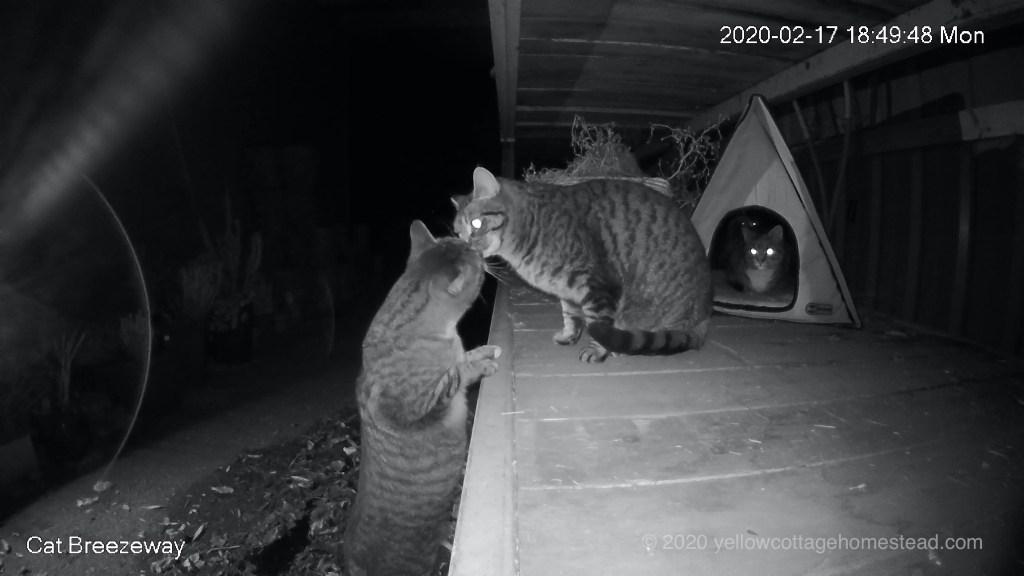 Three cats in breezeway