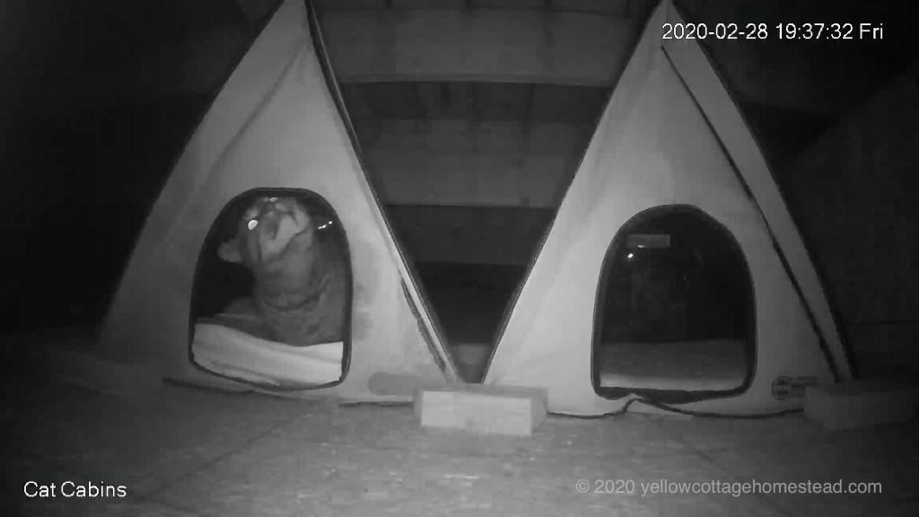 Pommie in cabin