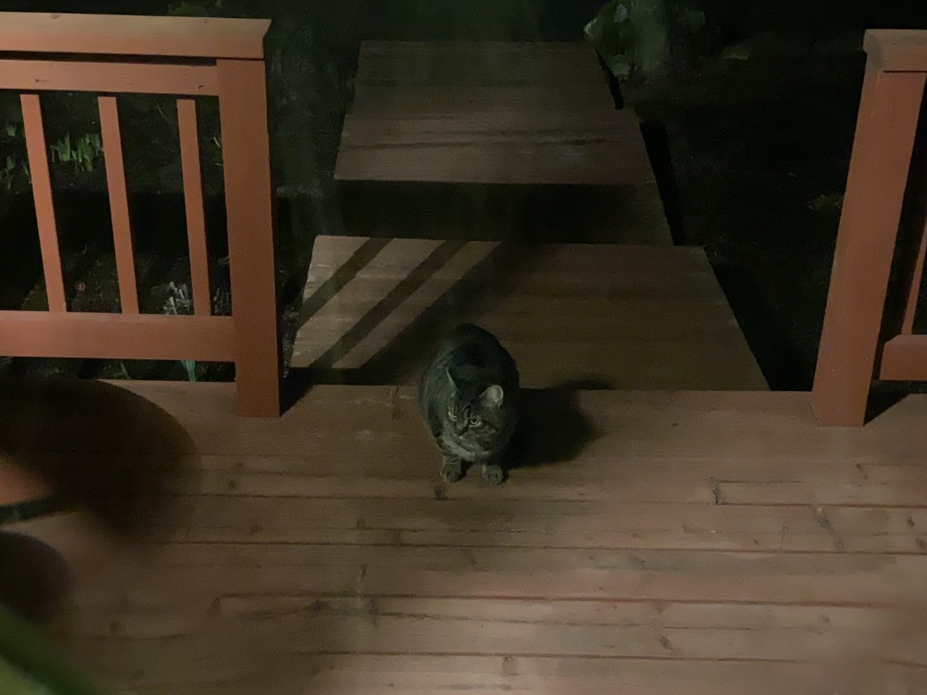 Cat on front steps