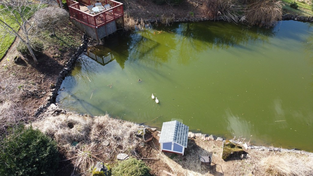 Aerial shot of pond and ducks