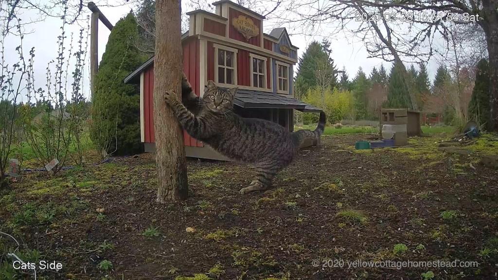 Cat scratching tree