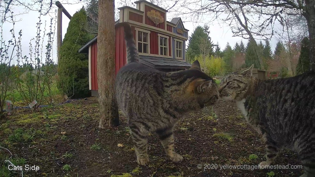 Cats sniffing noses