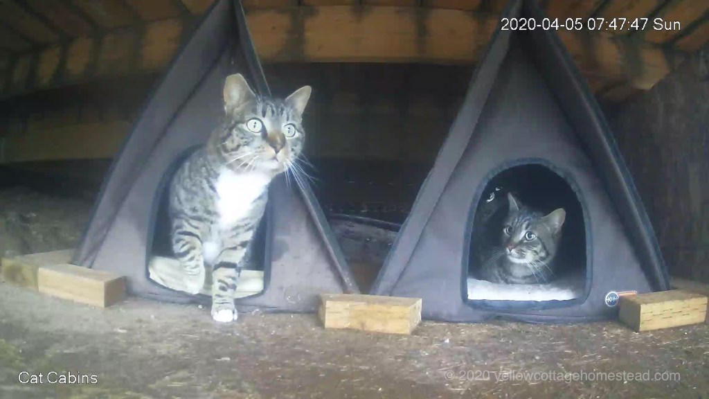 Two cats at the cabins