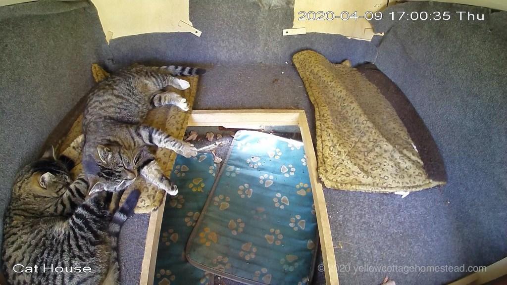 Cat snuggles