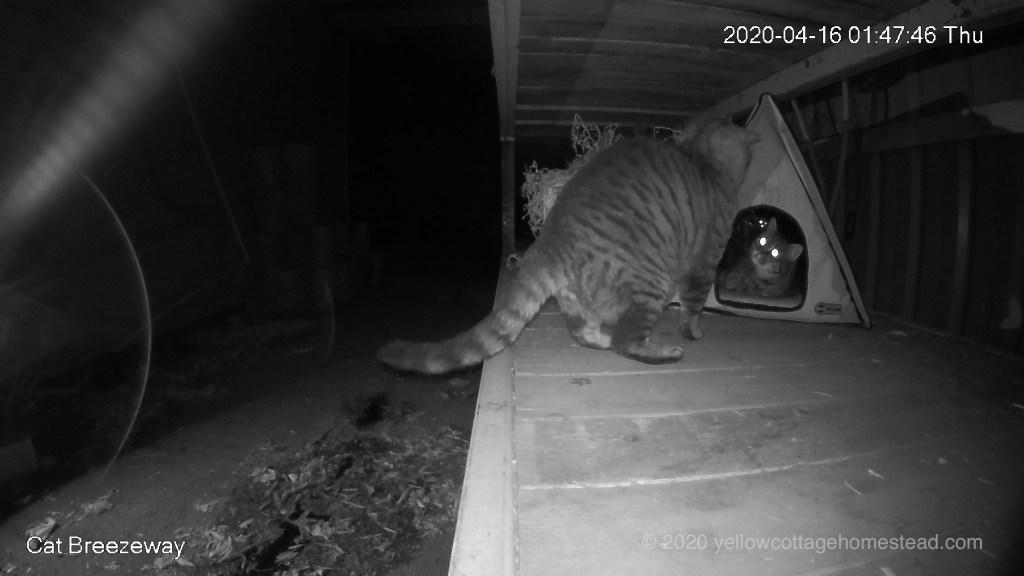 Alien cat in breezeway