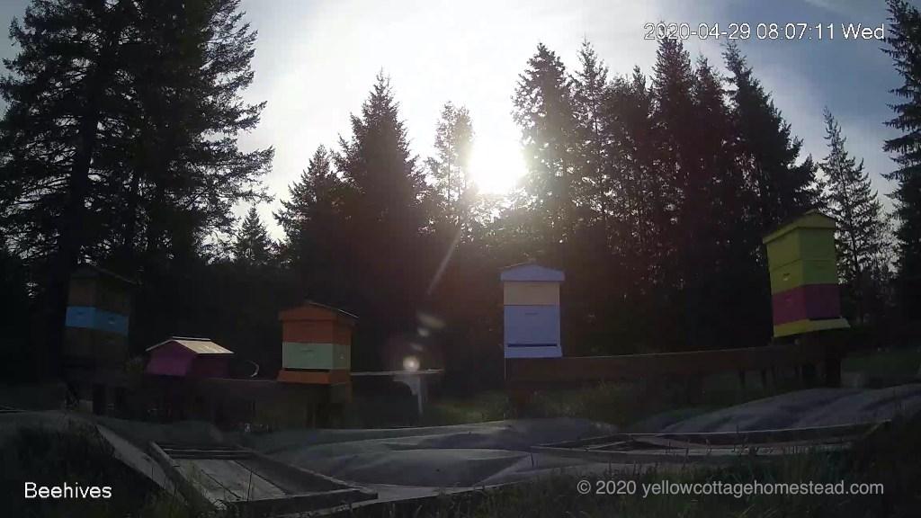 Sunrise behind hives
